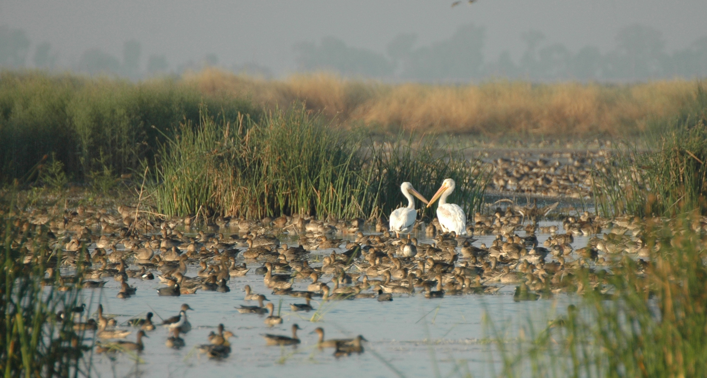 Davis Wildlife Area Credit Yolo Basin Foundation (2)