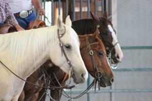 a_Sugarland_Horse_Park