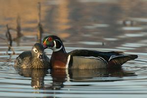 a_Davis_Wetlands