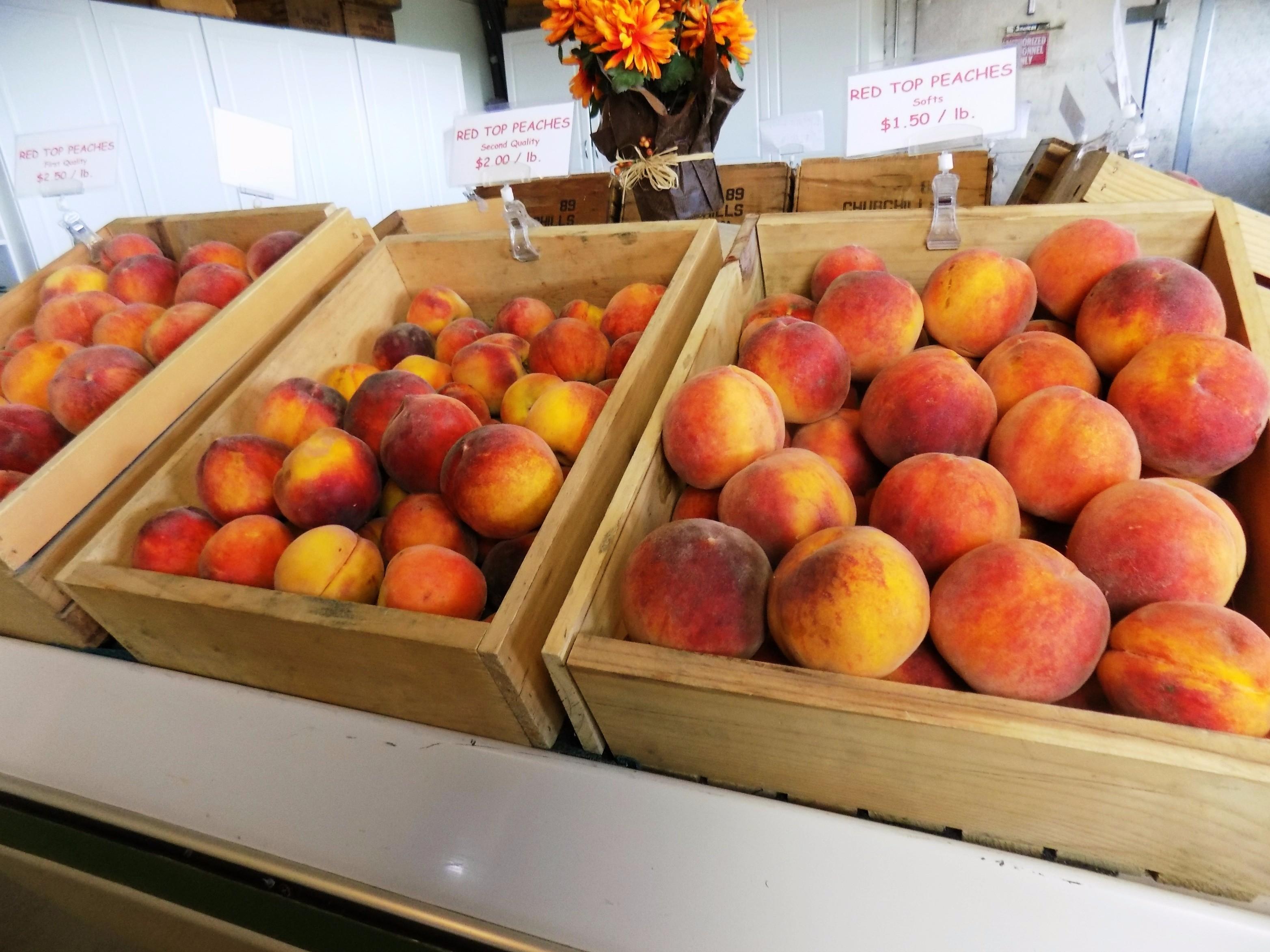 Peach Boxes087