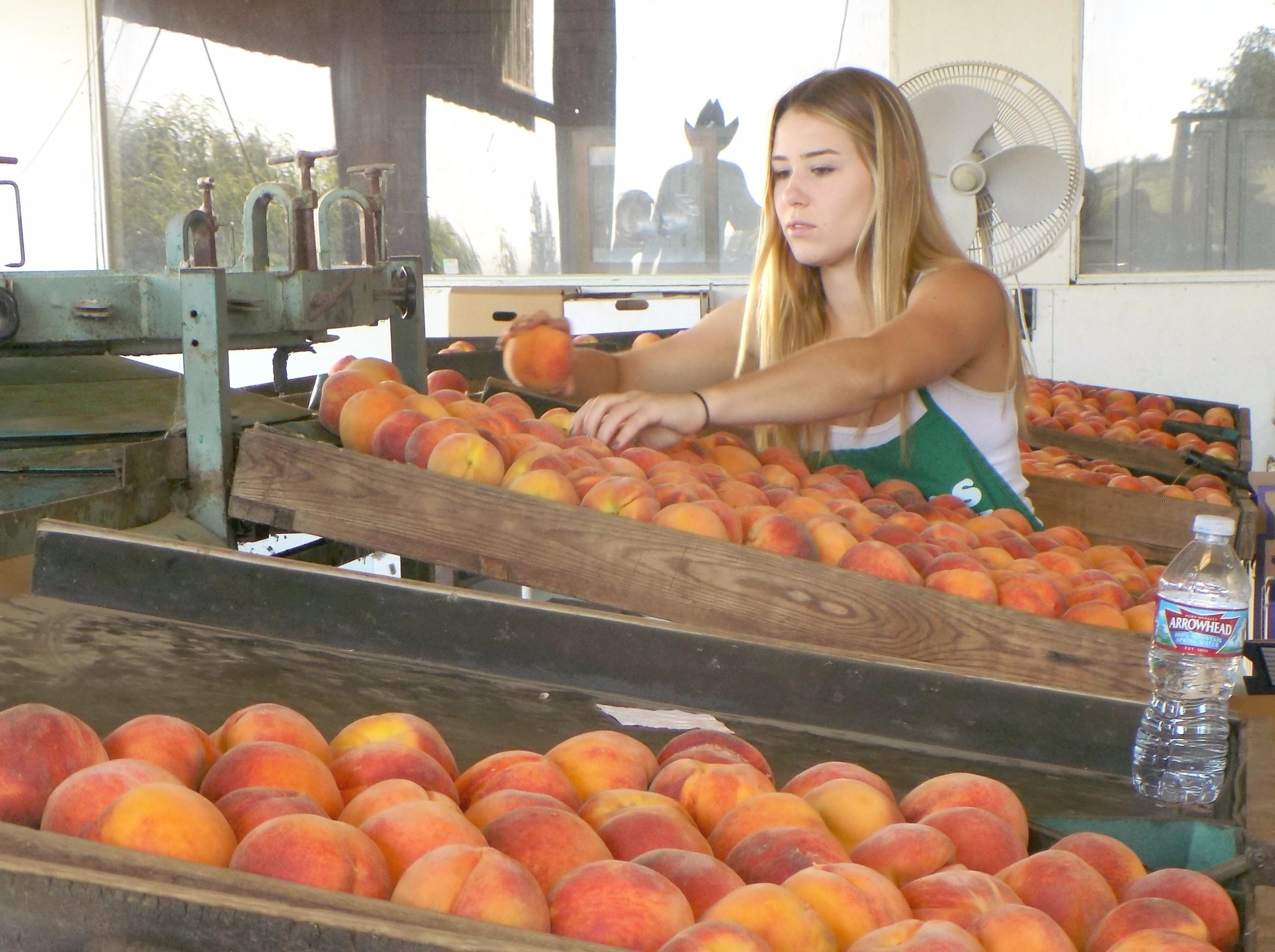 Peach Sort140