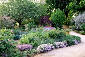 a_UC_Davis_Arboretum_(2)