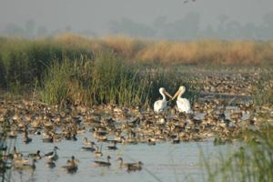 b_City_of_Wetlands