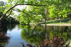 b_UC_Davis_Arboretum