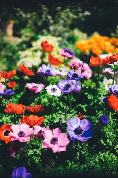 Kitchen Gardening by the Month
